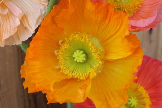 www.andreakgristfloralart.com
